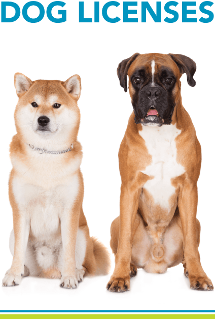 Dog Licensing with picture of two dogs