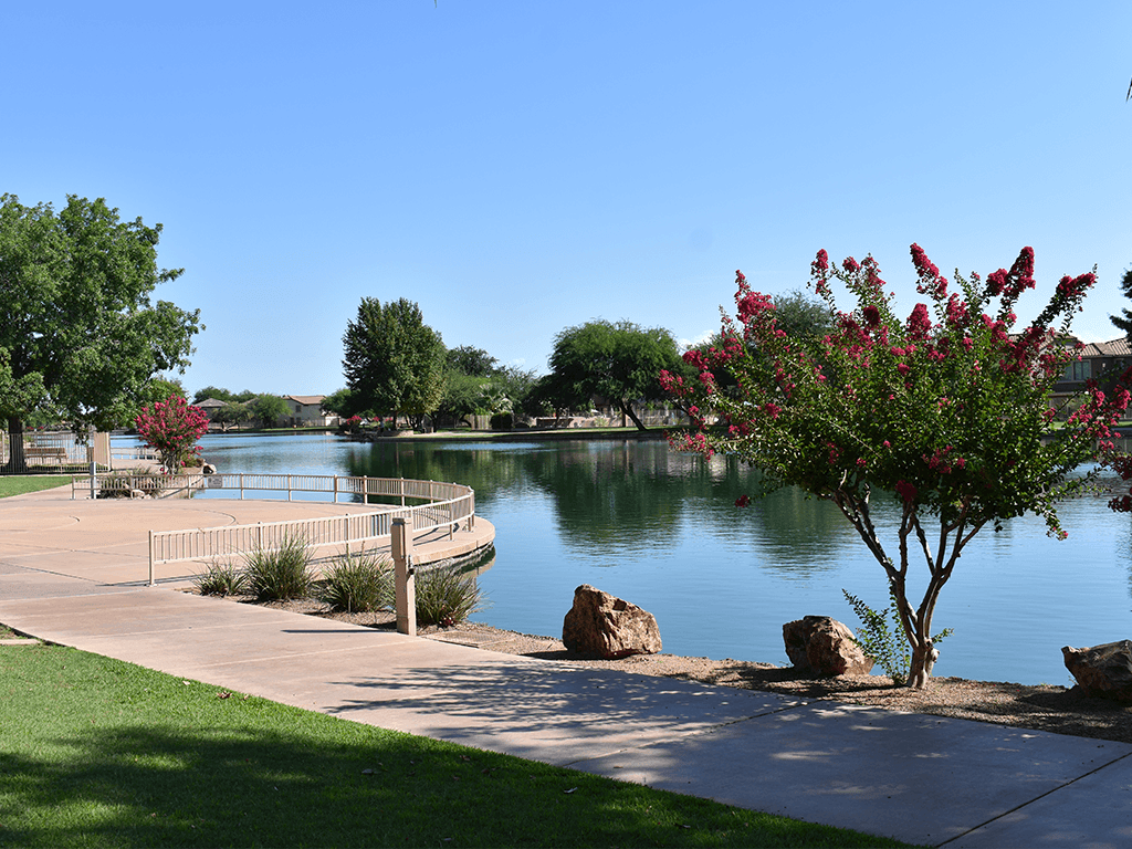 Sahuarita Lake Park, path, and pink floral bushes