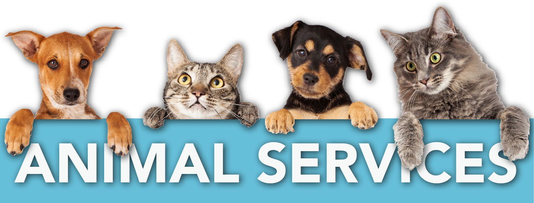 Animal Services Header